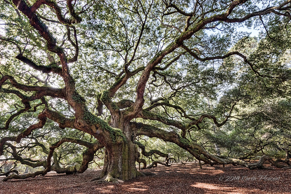 Angel Oak, Charleston, SC