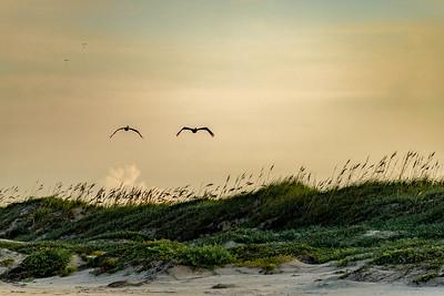 Pelicans & Paragliders