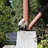 King Vulture at the Outdoor Theater