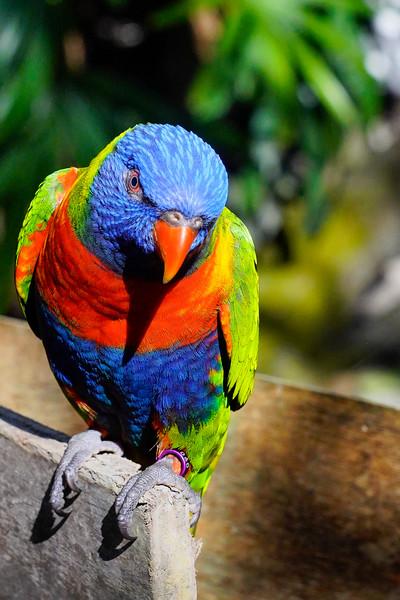 Port Douglas - Cairns