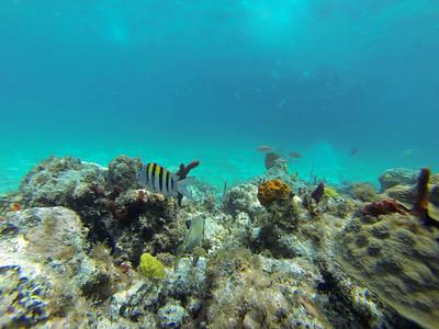 2016 CruiseSnorkeling GoPro114Ed2