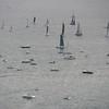 sailboat-race-5917