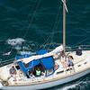 sailboat-race-5895