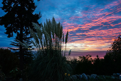 21.     Pampas Grass Sunrise