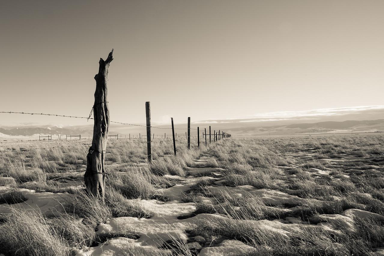 Montana Pasture
