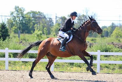 2017 Horse Shows