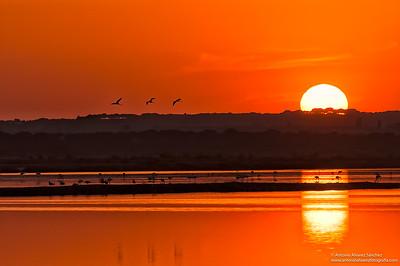 El sol se oculta en marismas del Odiel / The sun is hidden in Odiel marshes