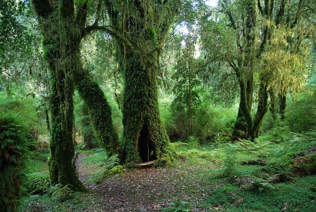 Bosque y parque de alerces