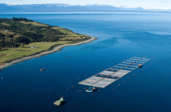 salmon cages on islands in southern Chile