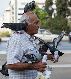 Pigeons, Athens, Greece, 2012