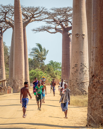 Alley of the Baobobs, Morondava, Madagascar