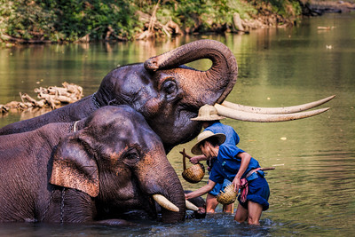 Washing Tusks, Elephant Camp