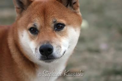 Kenji0112(edit)_0002