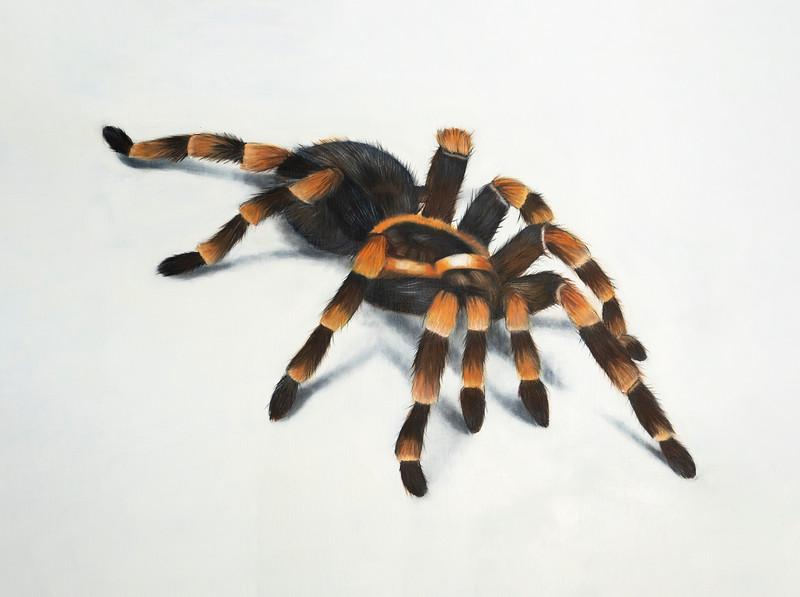 Dana Blust Spider