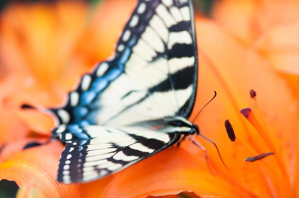 FreePhotoFri  IlzeLucero Bugs (13)