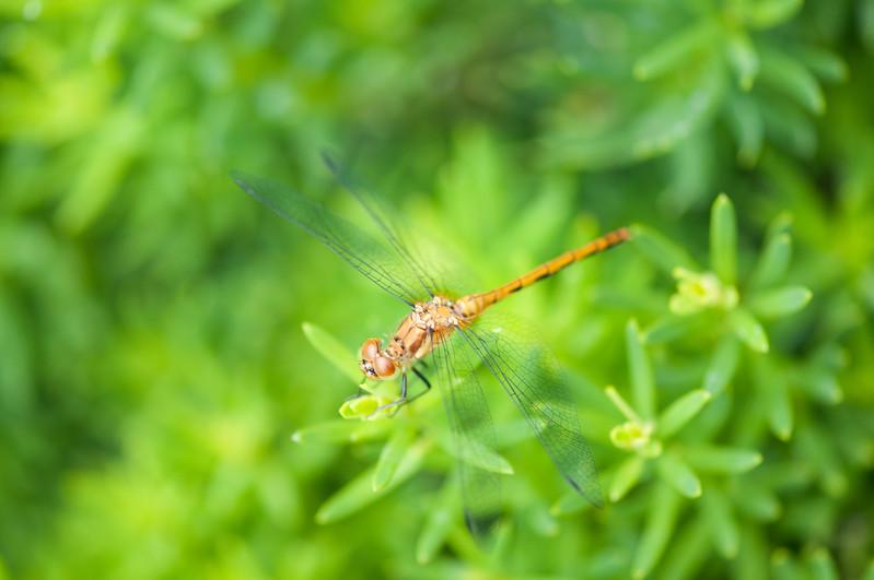 FreePhotoFri  IlzeLucero Bugs (15)