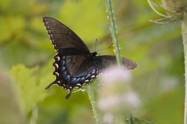 FreePhotoFri  IlzeLucero Bugs (4)