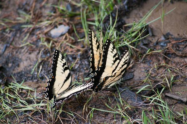 FreePhotoFri  IlzeLucero Bugs (5)