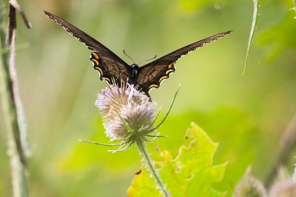 FreePhotoFri  IlzeLucero Bugs (3)