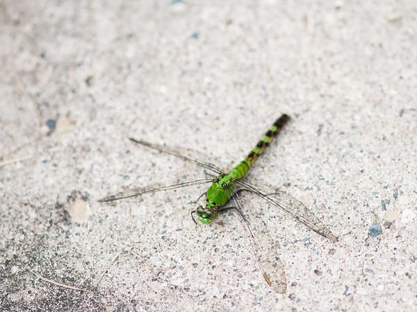 FreePhotoFri  IlzeLucero Bugs (16)