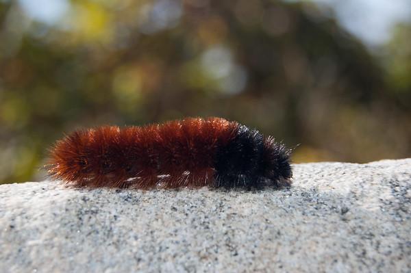 FreePhotoFri  IlzeLucero Bugs (8)