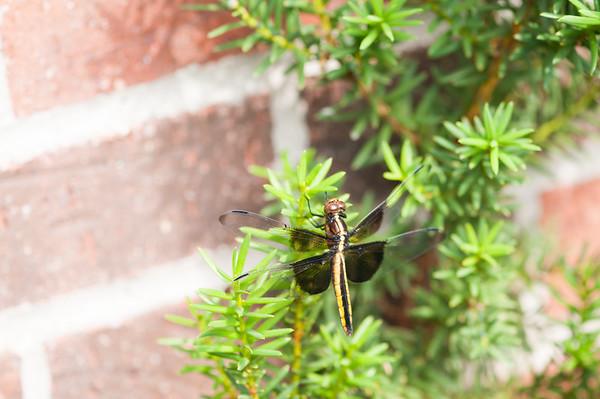 FreePhotoFri  IlzeLucero Bugs (17)