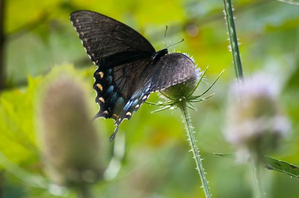 FreePhotoFri  IlzeLucero Bugs (1)