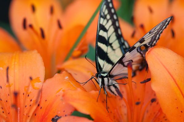 FreePhotoFri  IlzeLucero Bugs (12)