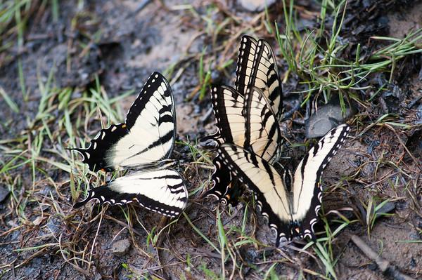 FreePhotoFri  IlzeLucero Bugs (6)