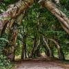 Garden of Castle Amerongen, Netherlands