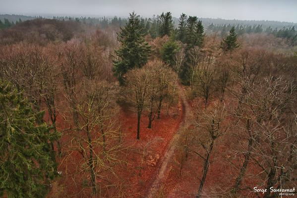 Kaapse bos, Doorn, Netherlands