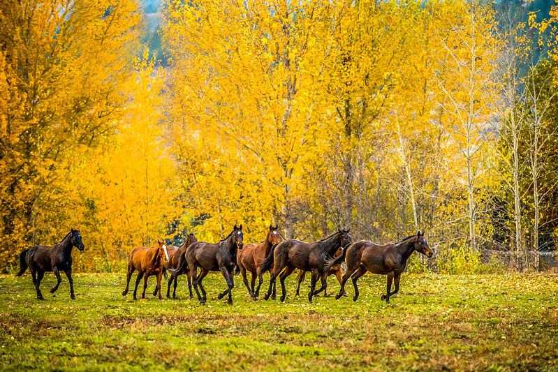 Polo Ponies'  Freedom