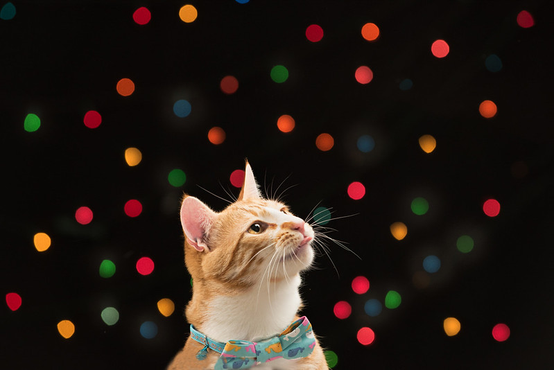 Christmas Feline Fun