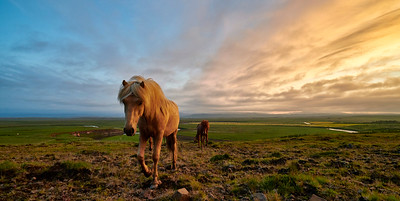 One of the many, many horses you will see all over Iceland. These sturdy beasts are both incredibly friendly and unique in many ways. Typical Icelandic countryside with streams and a sunrise beginning to show on the right hand side. Runnar, Iceland