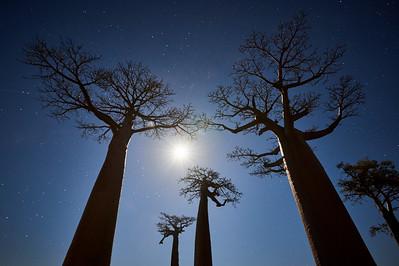 1705-13-009-Allee_de_Baobab-EvM