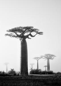 1705-13-035-Allee_de_Baobab-EvM-edit
