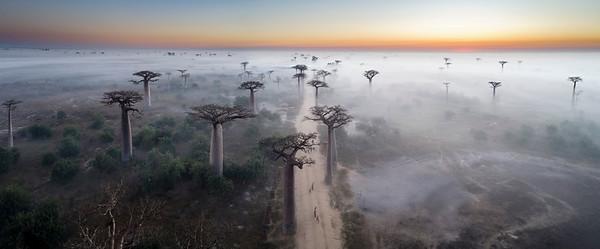 1705-13-050-Allee_de_Baobab-EvM-Edit-Pano-Edit-Edit