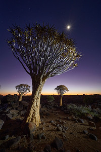 1911-02-090-Quiver Tree Forest-EvM