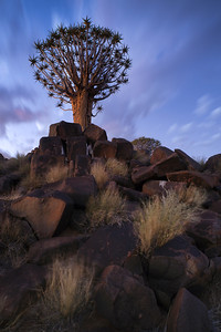 A lone and stark quiver tree and its rocky base, like some giant prehistoric dandelion. Painting with light, full colour vertical image. Mesosaurus Fossil Site and Quiver Tree Forest, Namibia