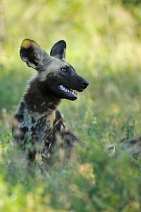 Thanda Game Reserve, Color Image, South Africa, African Impact, Mkuze, Kwazulu-Natal Province