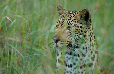 Photography, Colour Image, Colour Image, Kwazulu-Natal Province, South Africa, Thanda Game Reserve, Mkuze