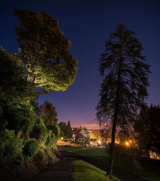Rose Bank Gardens - Night