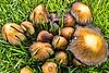 Mushrooms, Boulder County, CO (MRP-130)