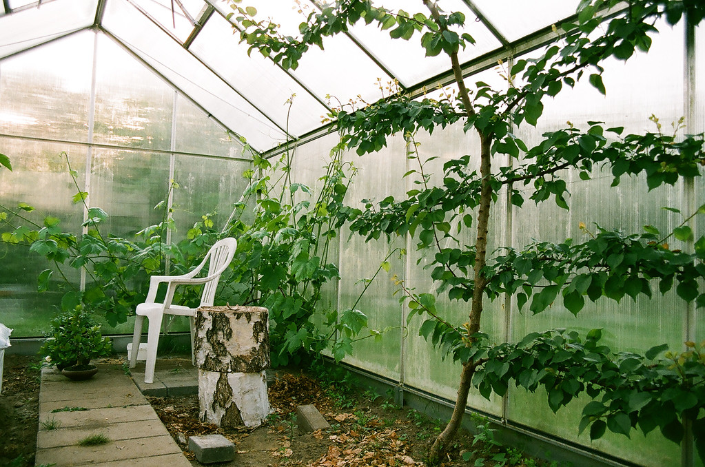 Our green house...just getting started! (Fuji Superia 200 film)
