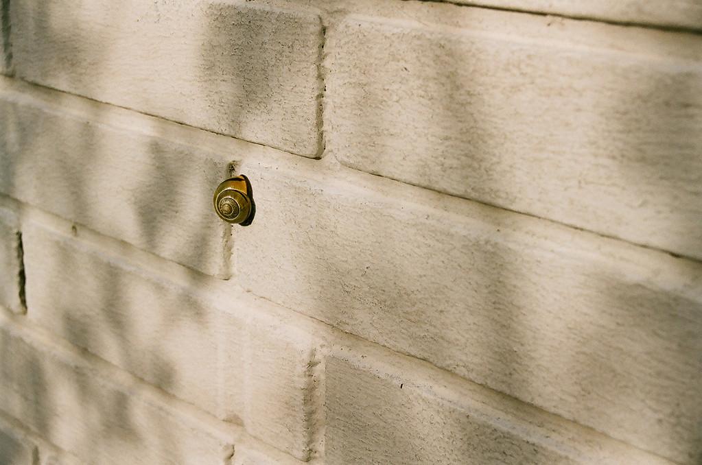 A wall-snail... (Fuji Superia 200 film)