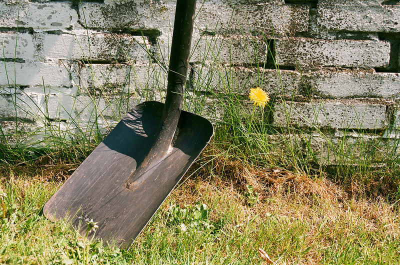 Shovel & Dandelion (Fuji Superia 200 film)
