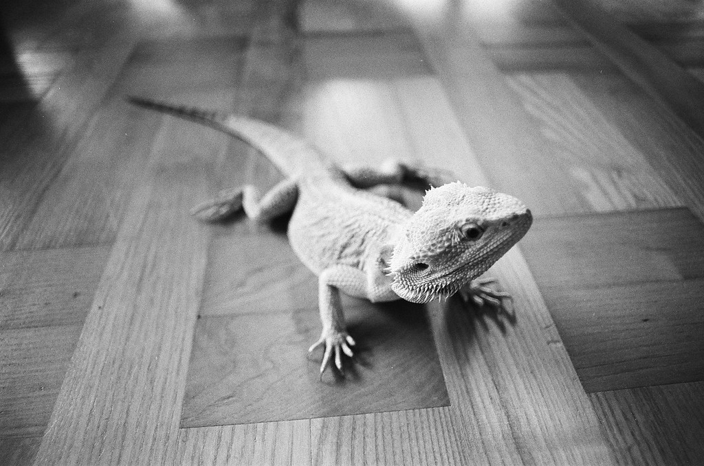 Bob the Beardy (Tri-X 400 film)