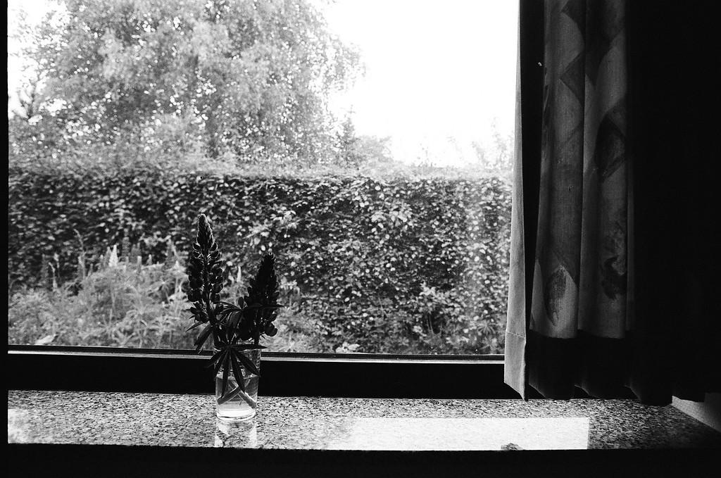 Bouquet in the window (Tri-X 400 film)