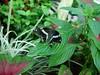 F0080-F03833Black Butterfly