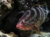 LipStickFish